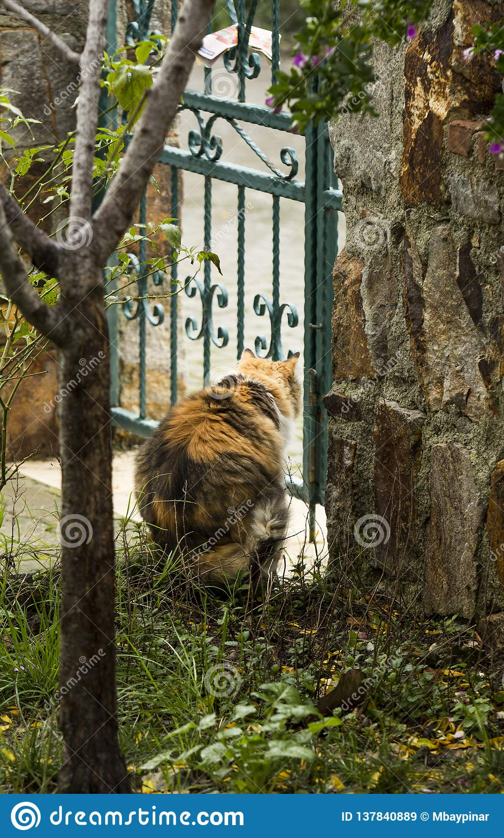 A tricolor cat seen from back stares through an iron cast garden door.