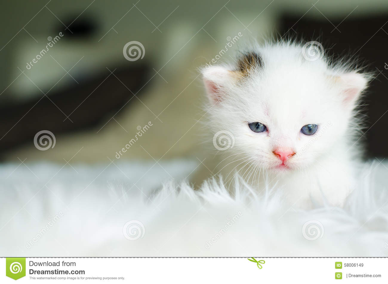 The Cat , Selective Focus Stock Photo - Image: 58006149