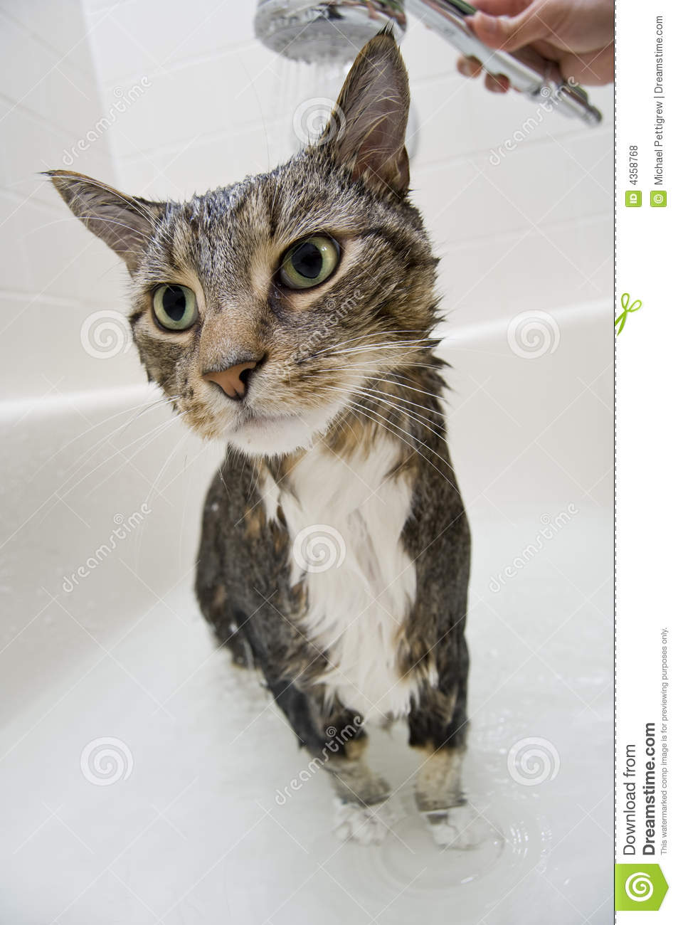 Cat In The Shower Royalty Free Stock Photos - Image: 4358768