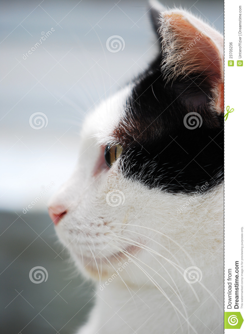Cat Side View Stock Photo Image Of Tick Whiskers