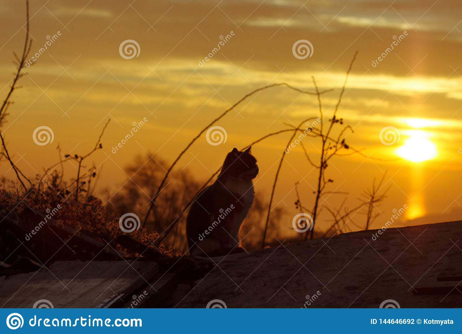 The cat sits on the roof of the house and looks at the sunset