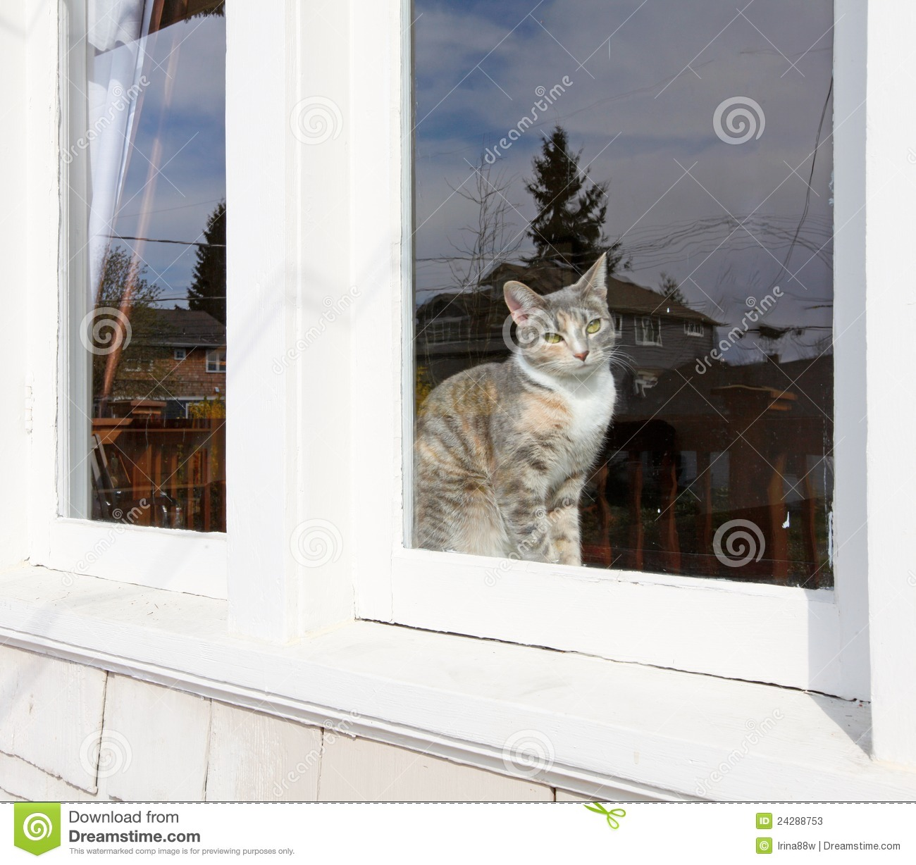 Cat Sitting Behind The Window Stock Image Image Of