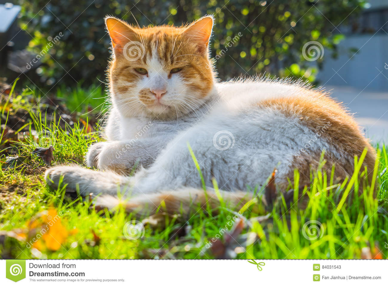 Cat Sitting On Footpath in un parco