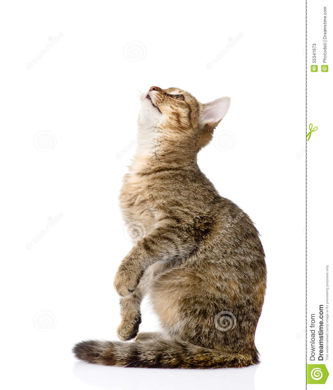cat-sitting-profile-looking-up-isolated-white-background-55341673.jpg