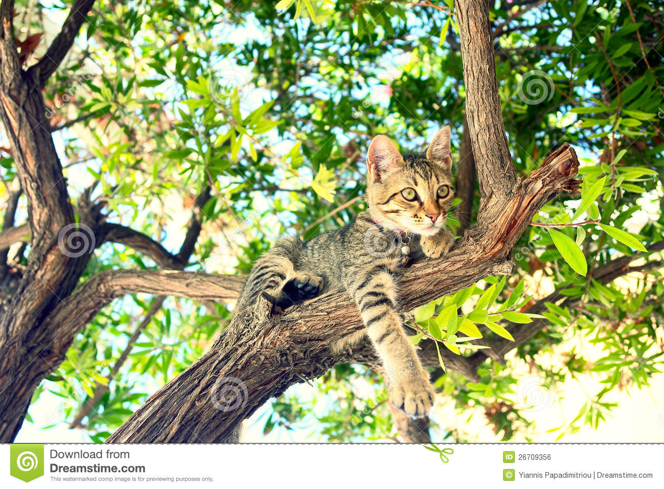 A Cat Sitting On A Tree Royalty Free Stock Image - Image ... Tabby Cat Sitting Up