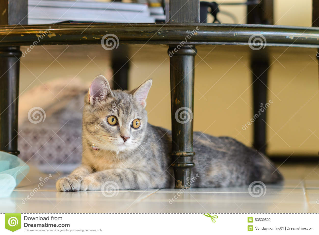 Cat Sitting Under Table Stock Photo Image Of Photo