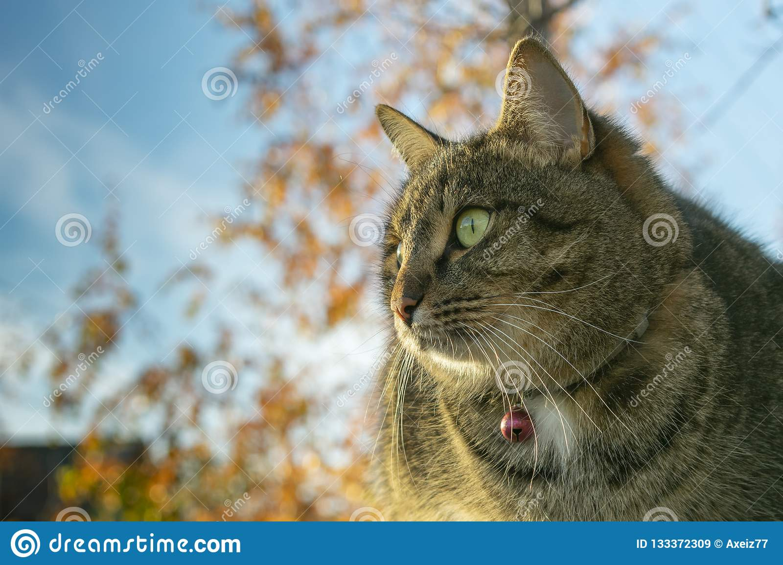 Cat sitting on wooden boards in the autumn against the sky