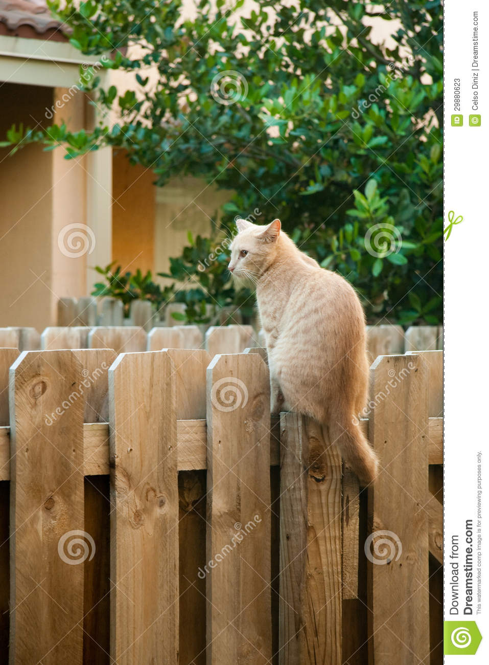 Cat On The Fence Stock Photos Image 29880623