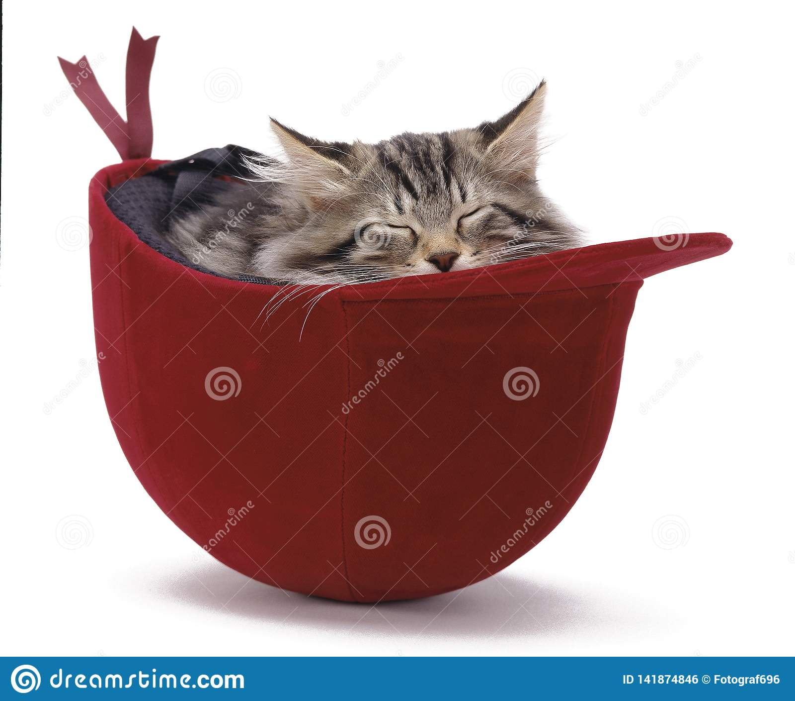 A cat is sleeping in a helmet.