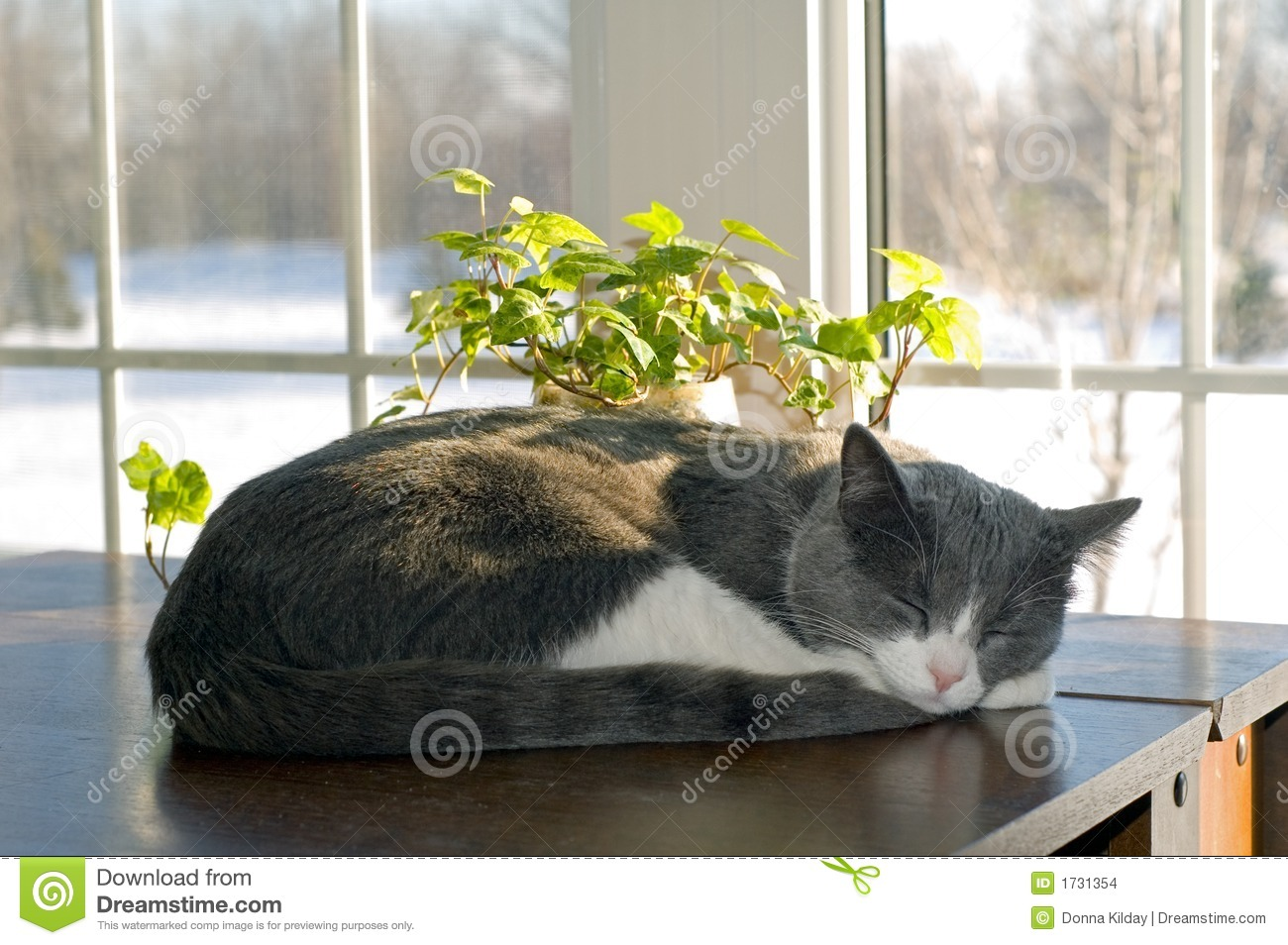 Cat Sleeping Stock Images Image 1731354