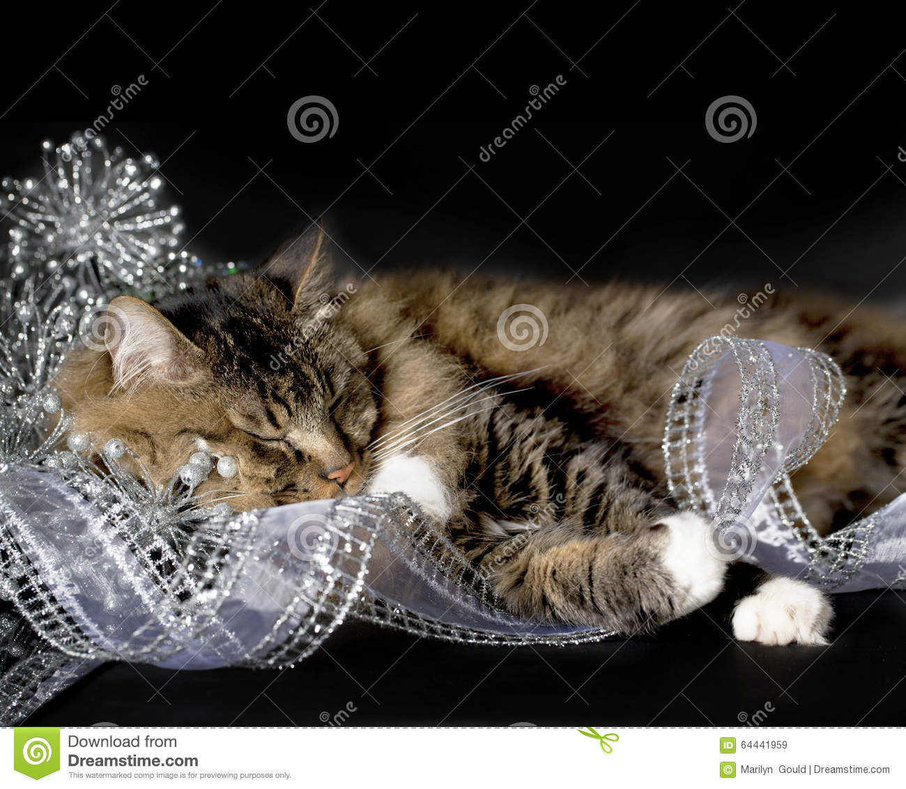 Cat Sleeping in Christmas Decorations