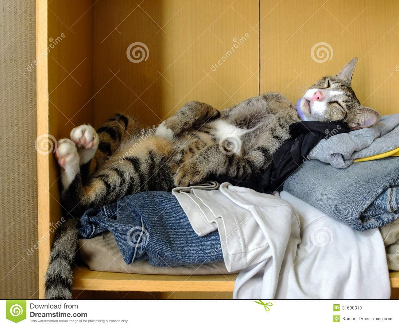 Cat Sleeping On Clothes Stock Image Image Of Clothes
