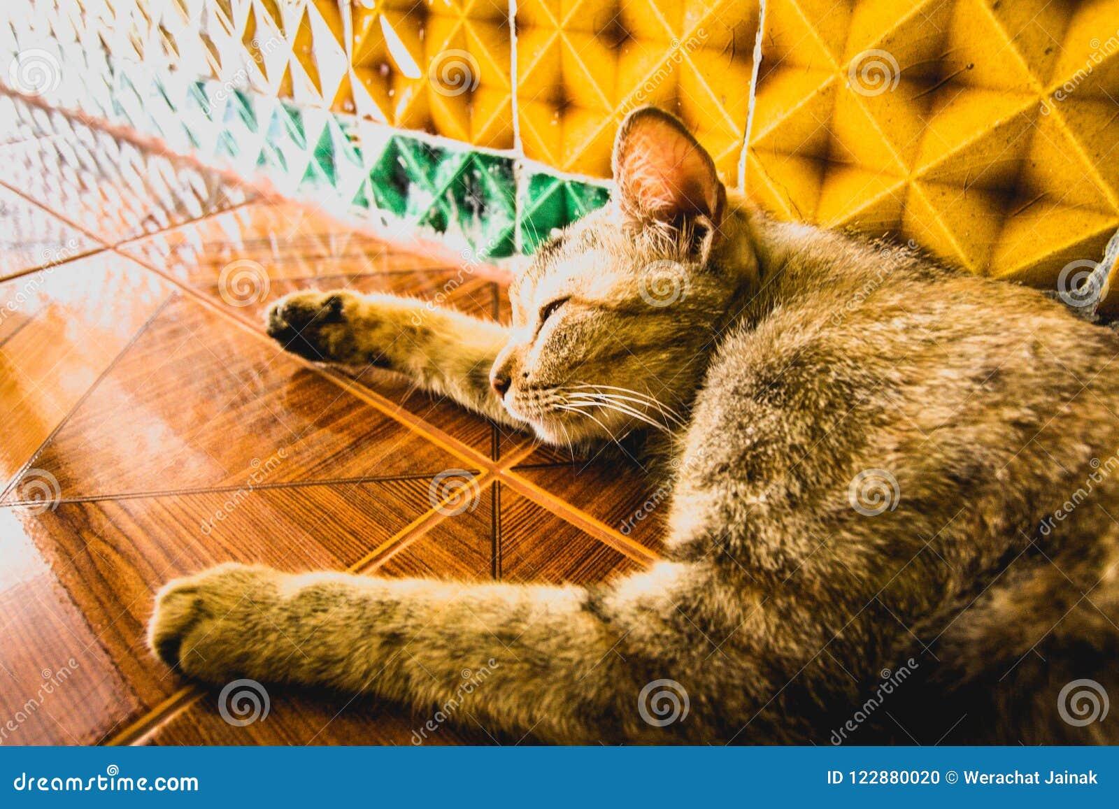 Cat Sleeping en el templo
