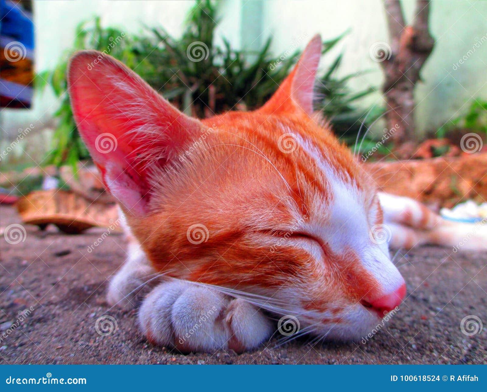 Cat Sleeping On The Ground perezosa