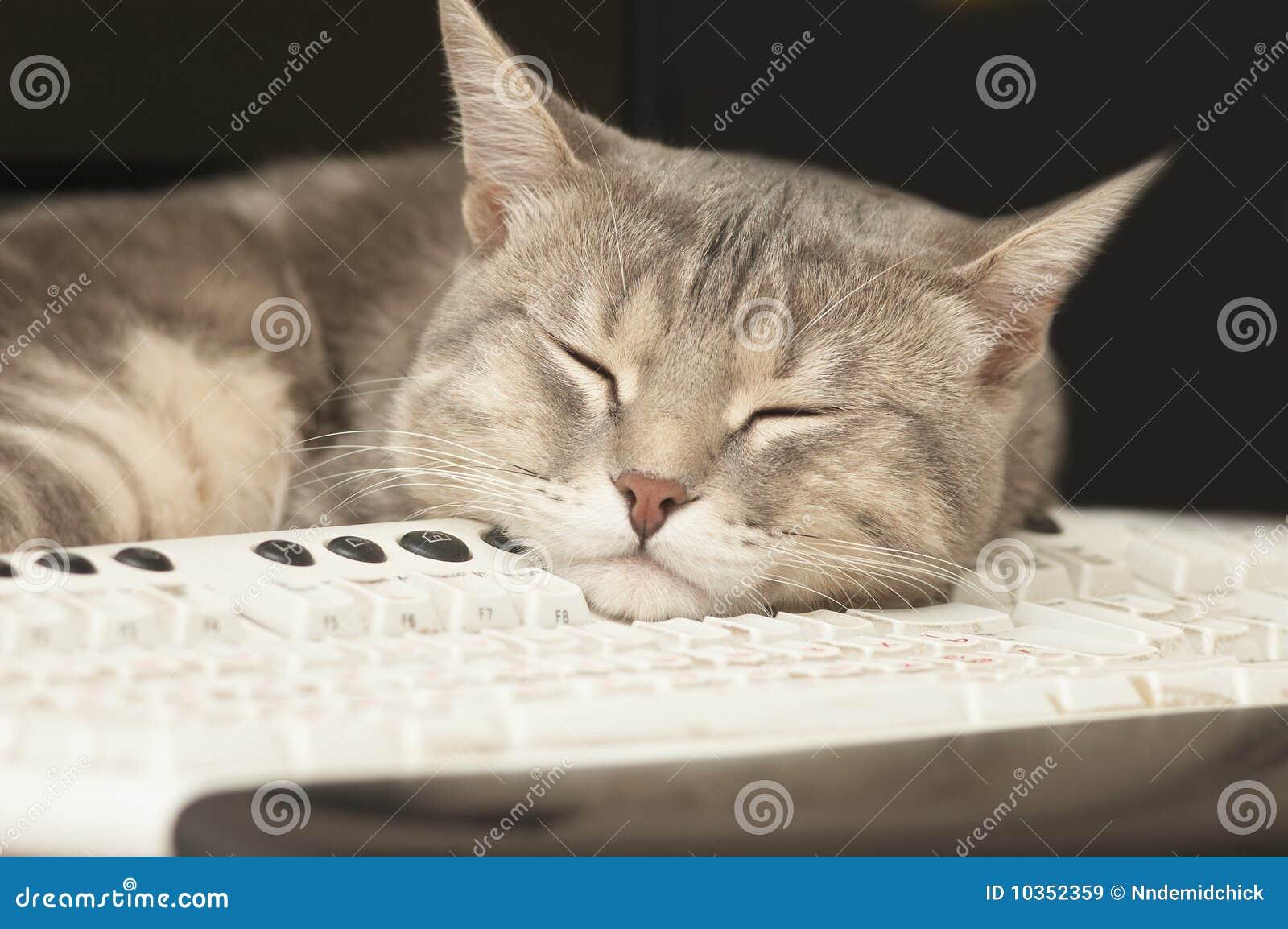 Cat Sleeping On Keyboard Royalty Free Stock Images - Image ...