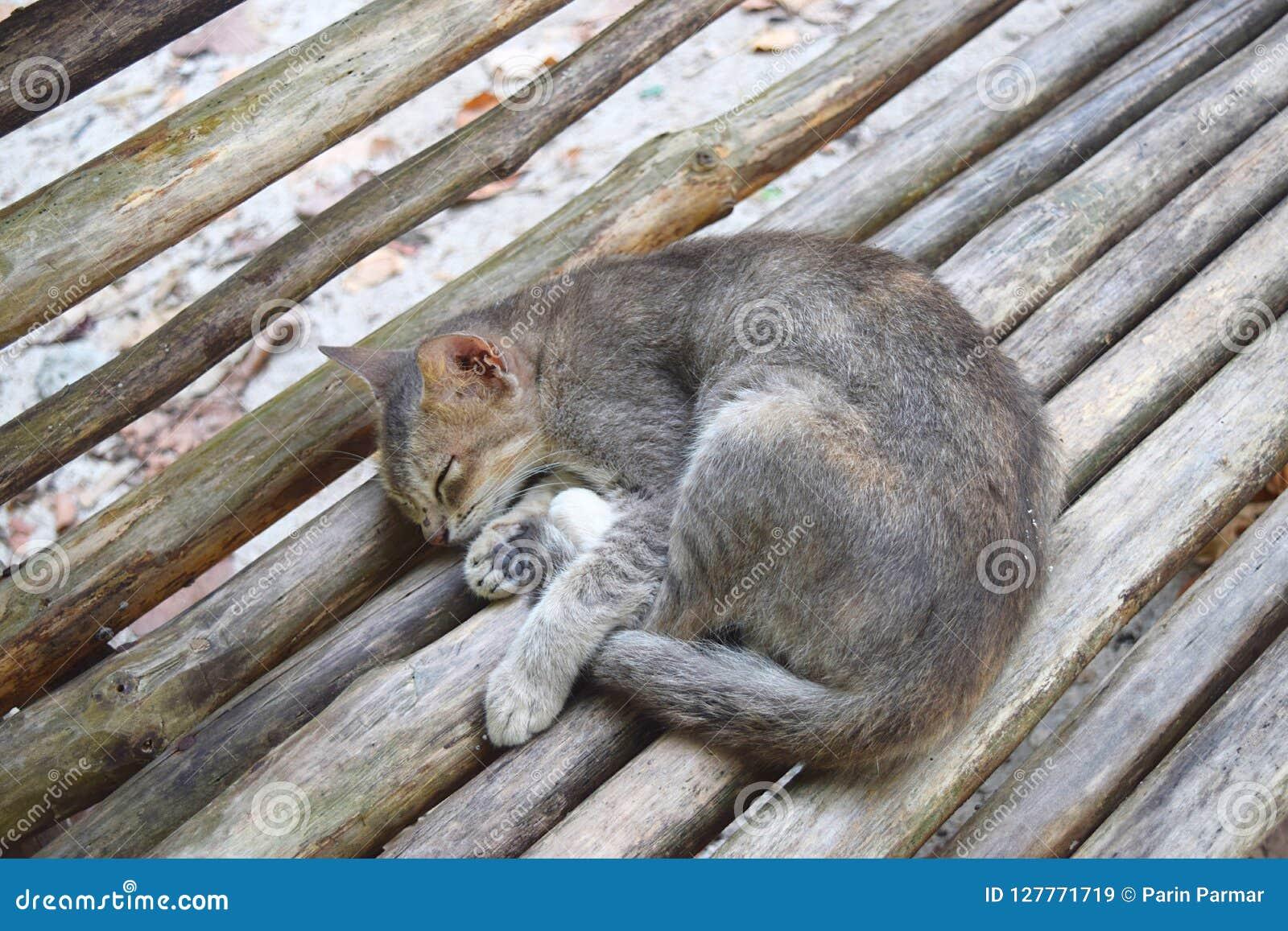 Cat Sleeping linda en un banco de madera - relajación fresca y resto pacífico