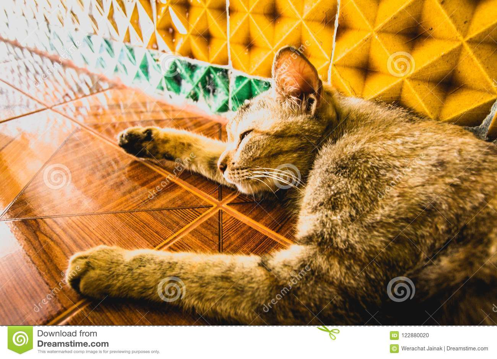 Cat Sleeping no templo