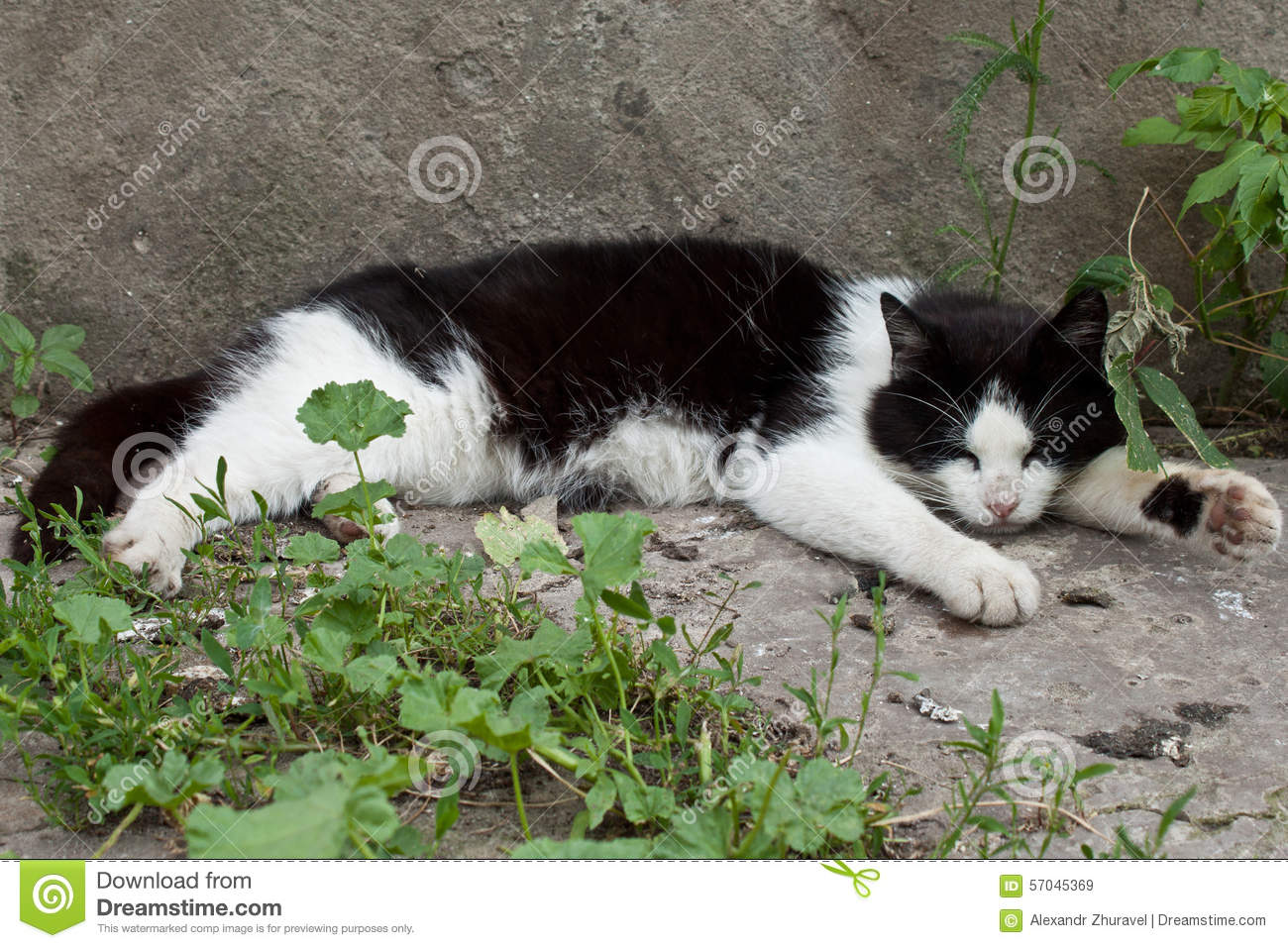 Cat Sleeping Stock Photo - Image: 57045369