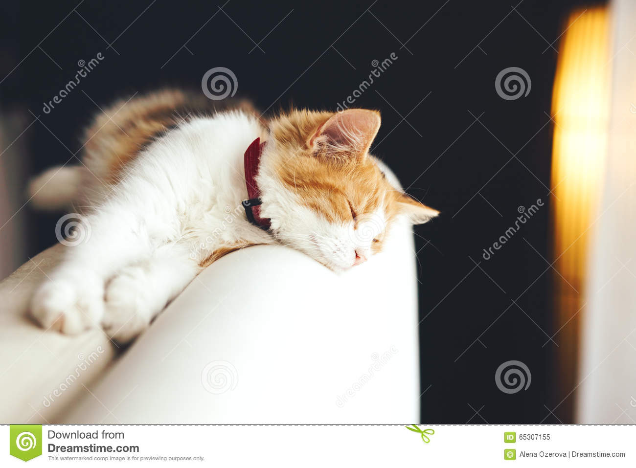 Cat sleeps at home