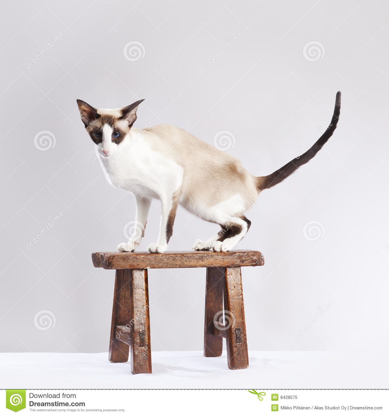 Cat on the small chair