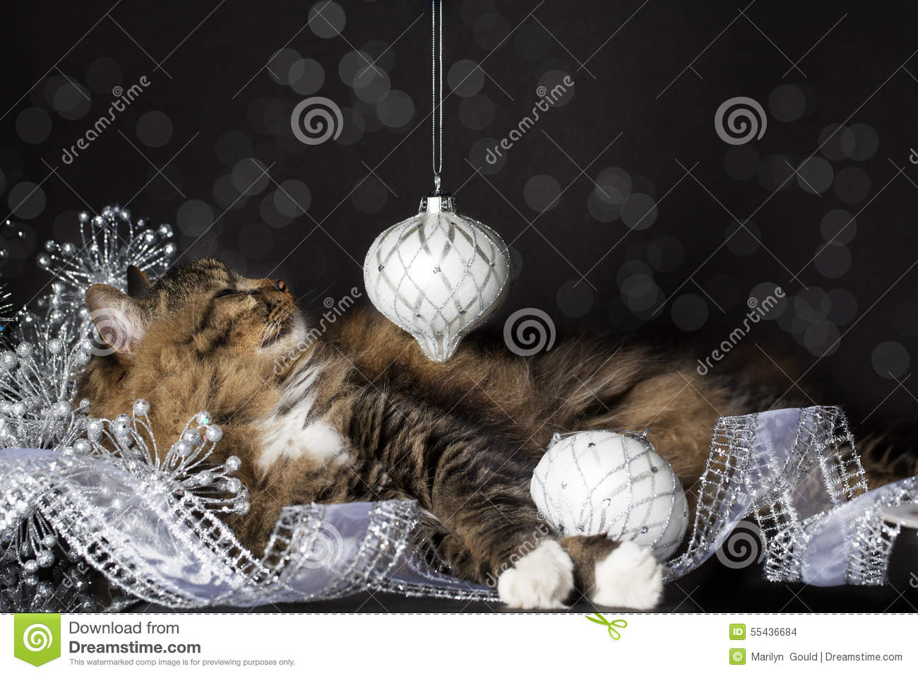Cat Smiling at Christmas Ornament