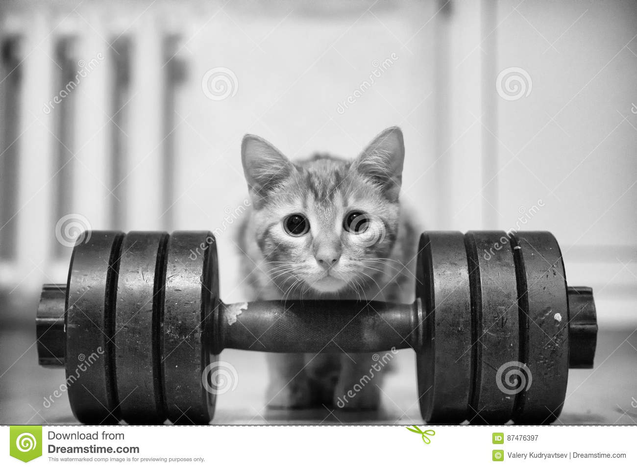 Cat Sportsman Powerlifter Bodybuilder
