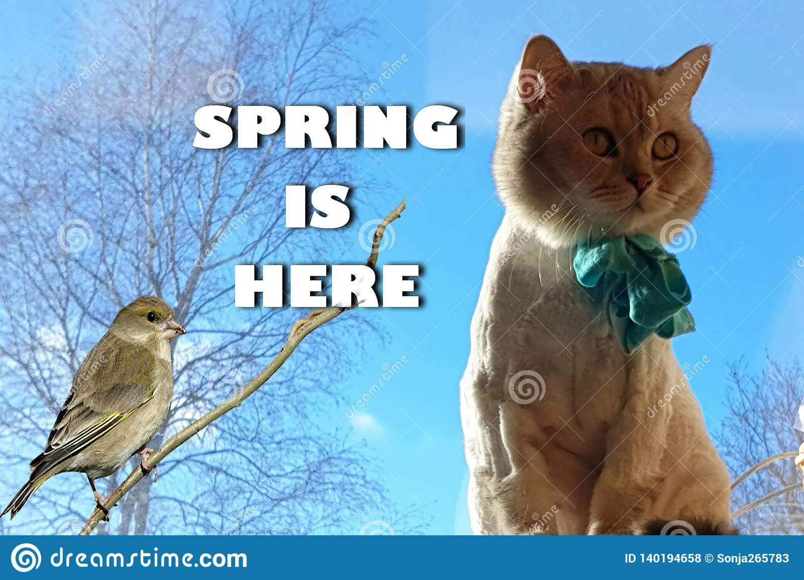 Cat On Spring Cute Funny British Cat white grey Cats Spring Cats