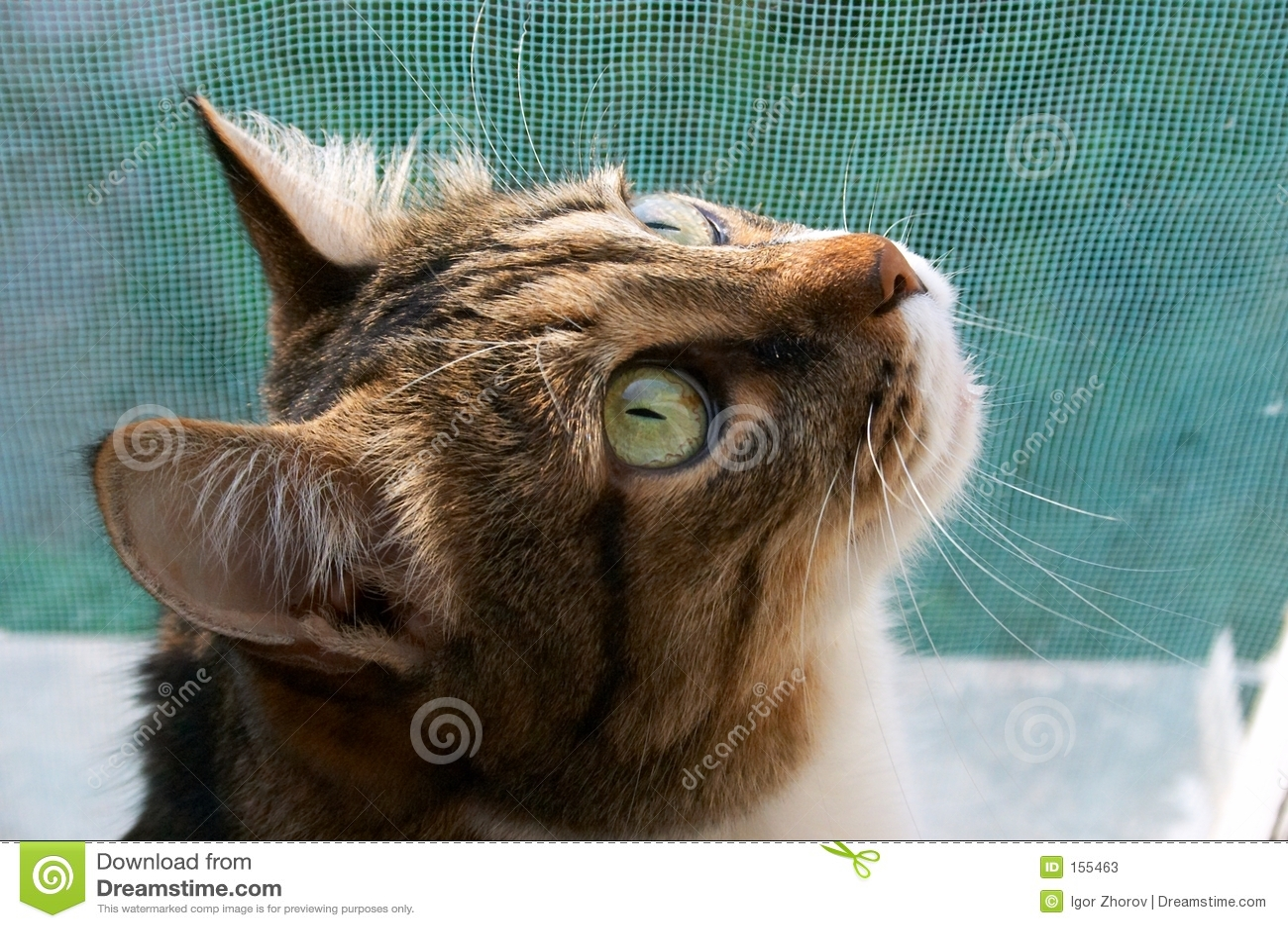 Cat stand sentinel