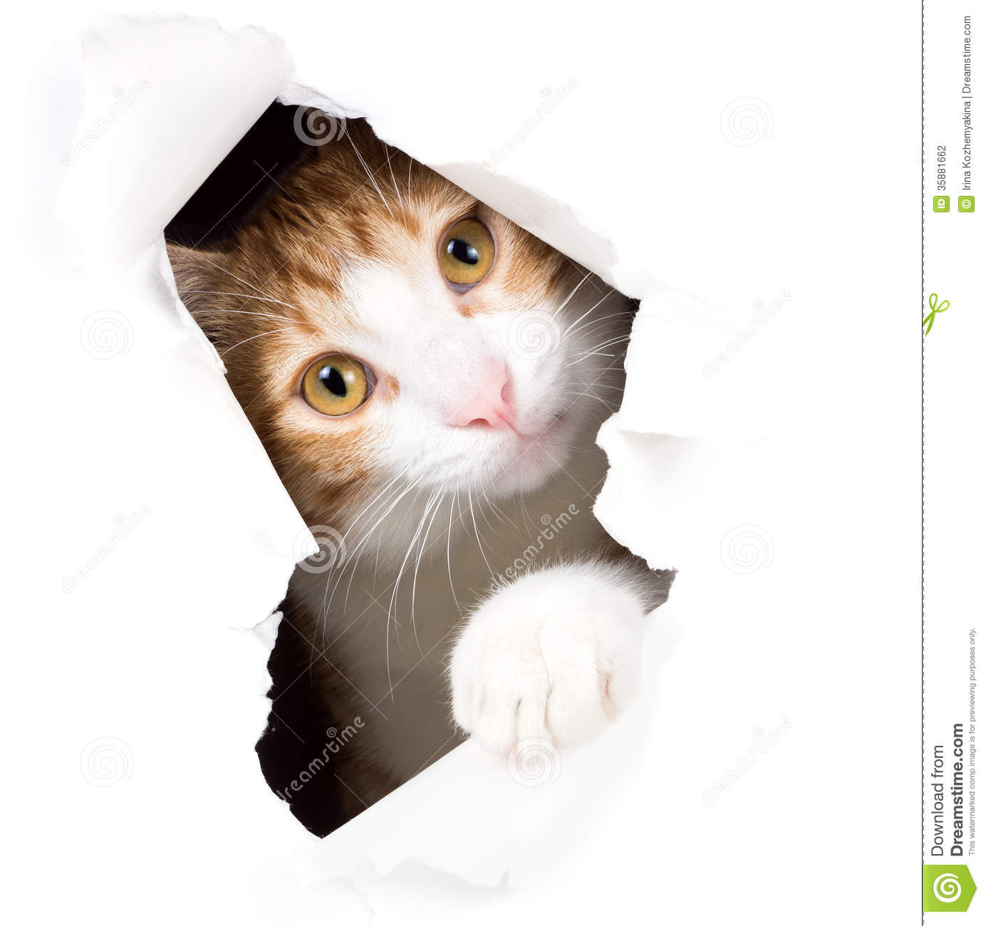 Cat stares through a hole in paper