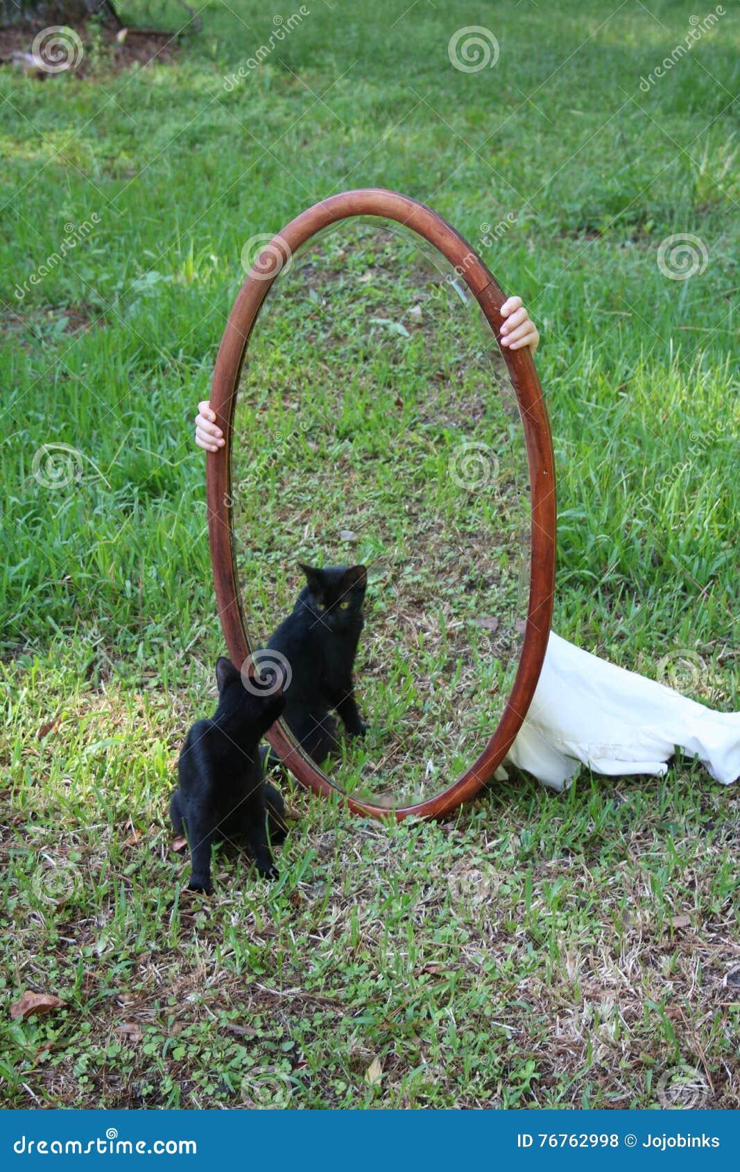 Cat Staring Into Mirror preta