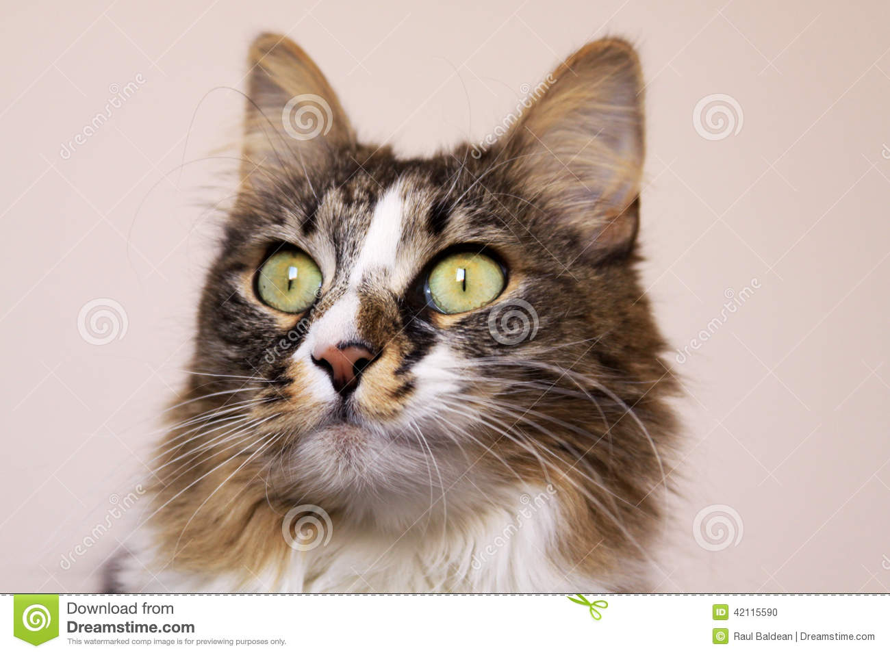 Cat staring with wide opened eyes