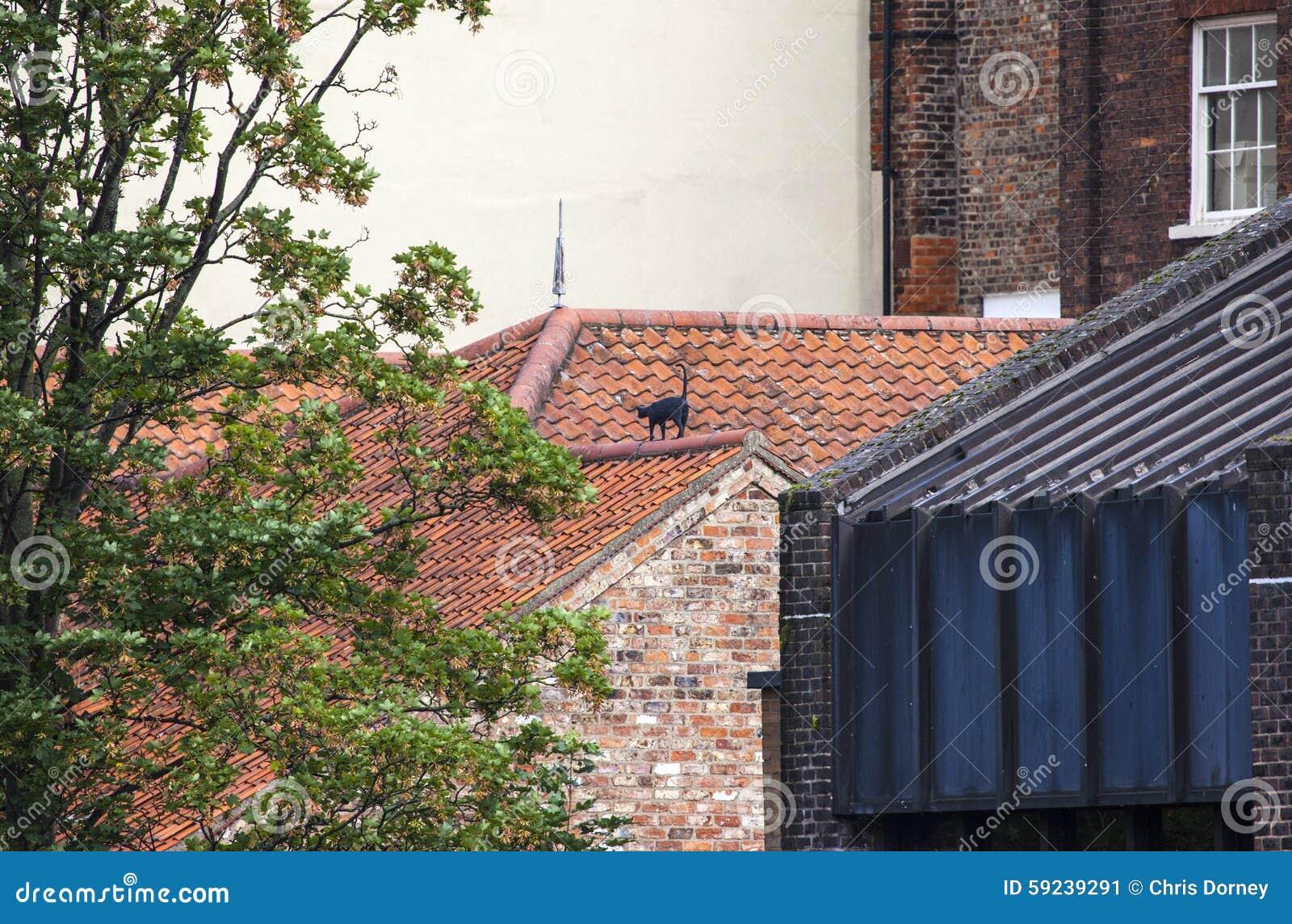 Download Cat Statue en York imagen de archivo. Imagen de ciudades - 59239291