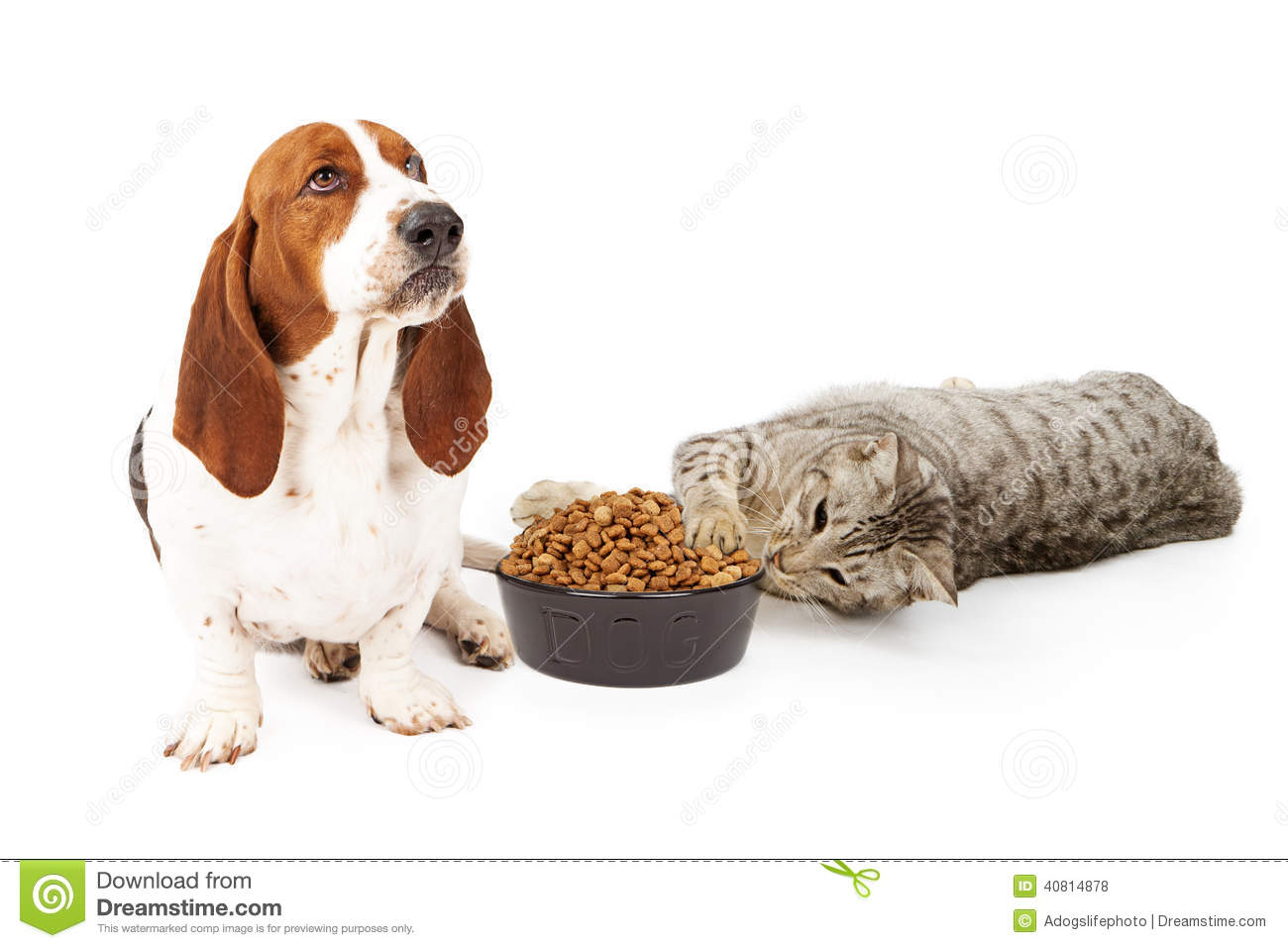How To Make Canned Dog Food Using Dry Dog Food