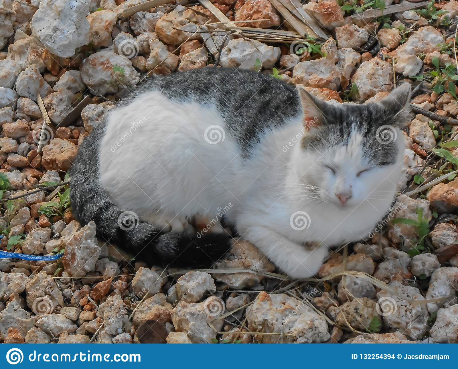 Cat on Stony Ground stock photo  Image of dried, curled