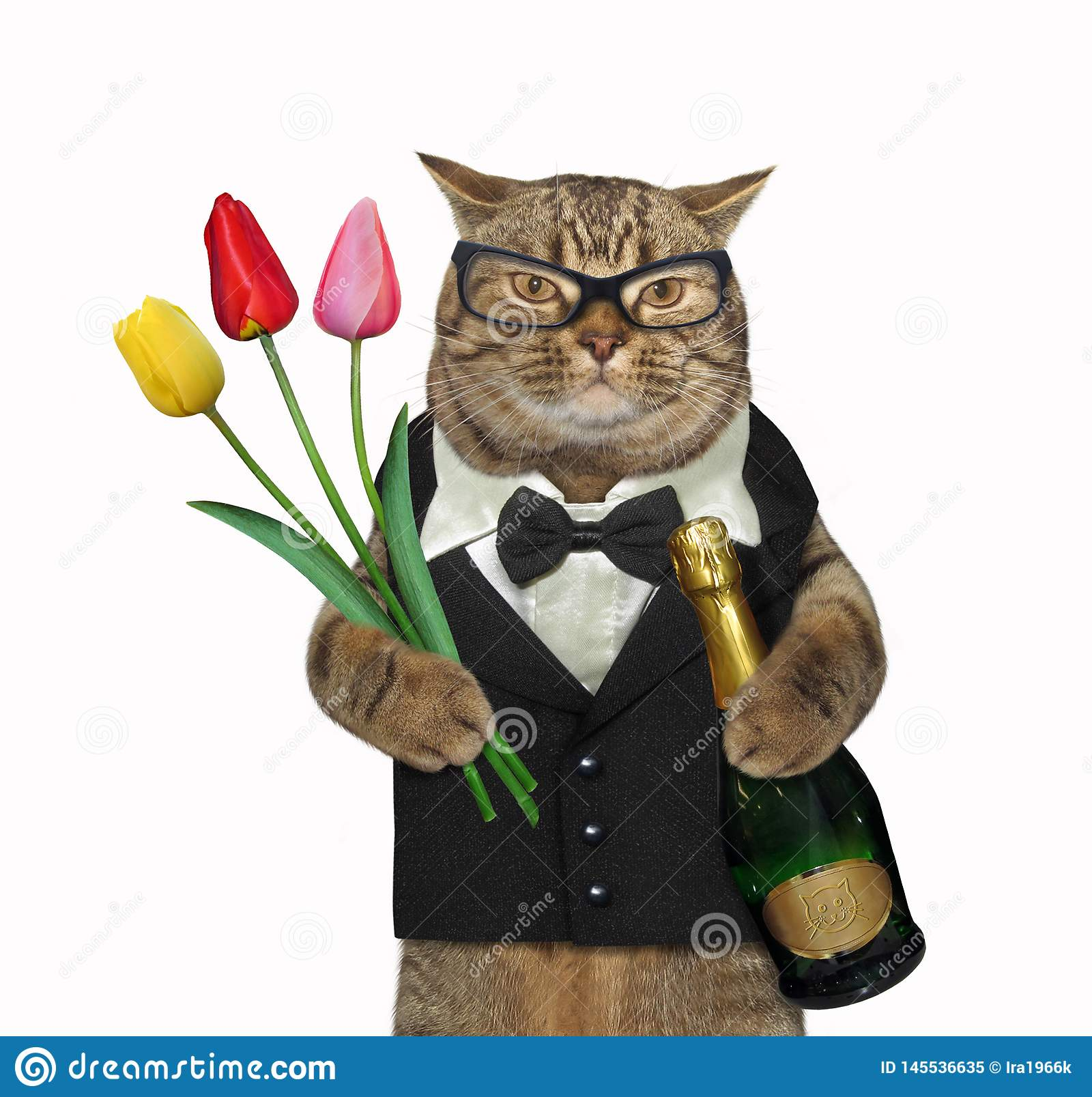 Cat in a suit holds wine and tulips