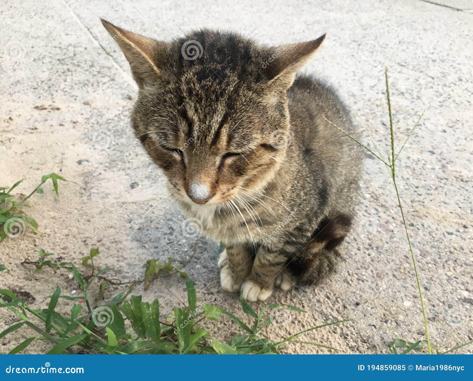 Coney Cat