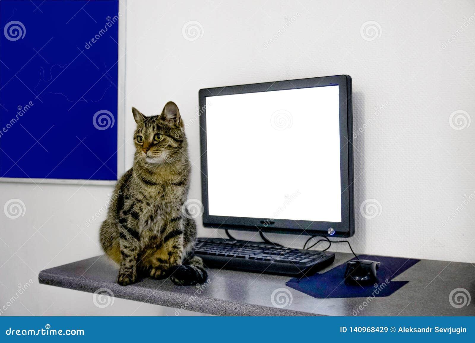 Cat, background, white, laptop, blackboard, , cute, text, kitten, advertising, black, kitty, pretty, beautiful, blank, mon