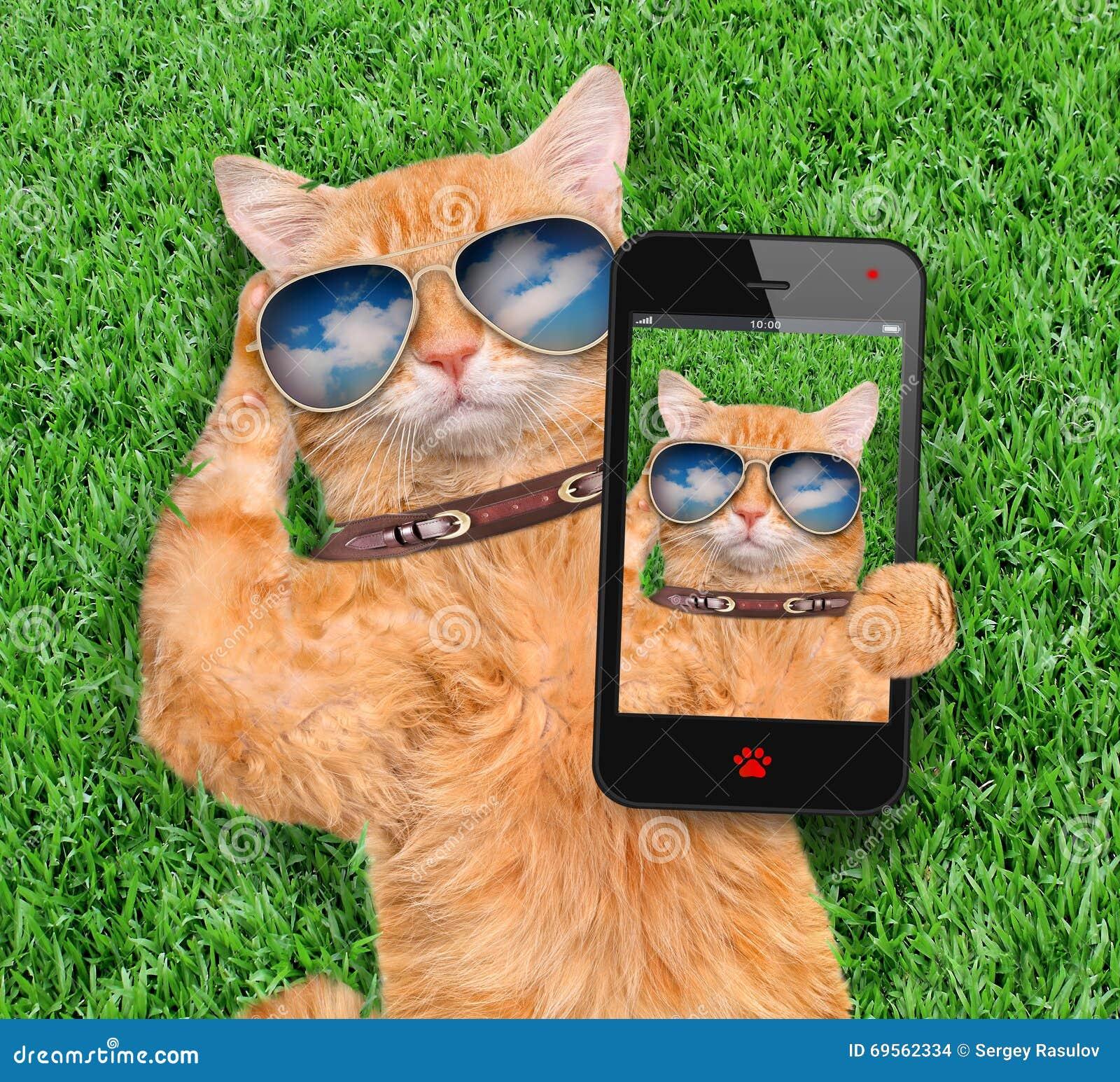 Cat Taking un Selfie