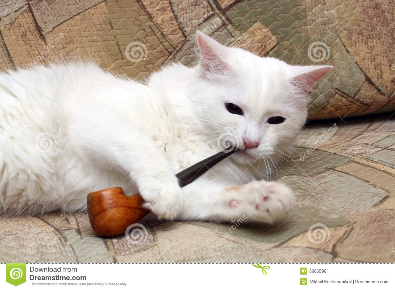 cat with tobacco pipe royalty free stock image image cat on sale cat on sax