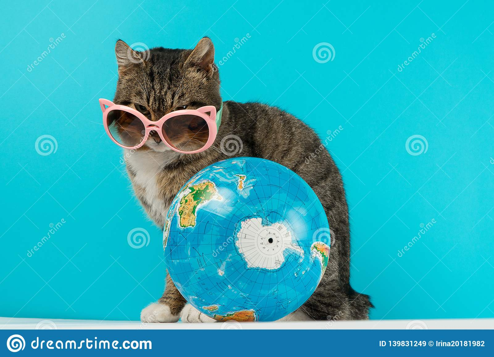 Cat traveler. cat meets on vacation