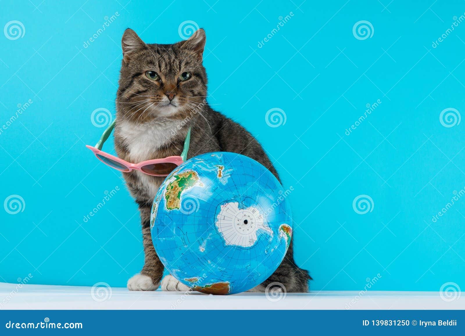 Cat traveler. cat meets on vacation