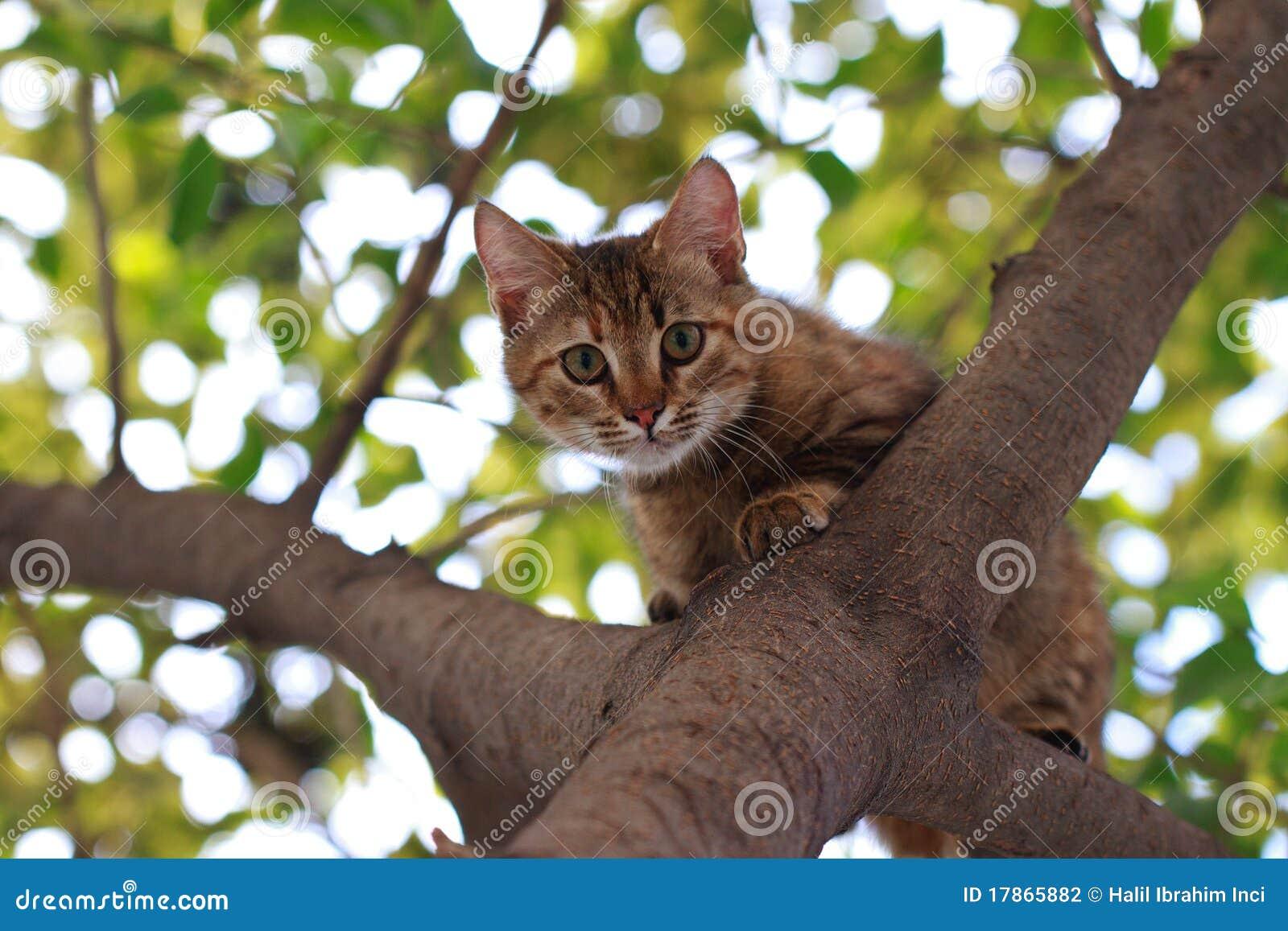 CAT ON TREE Stock Photography Image 17865882