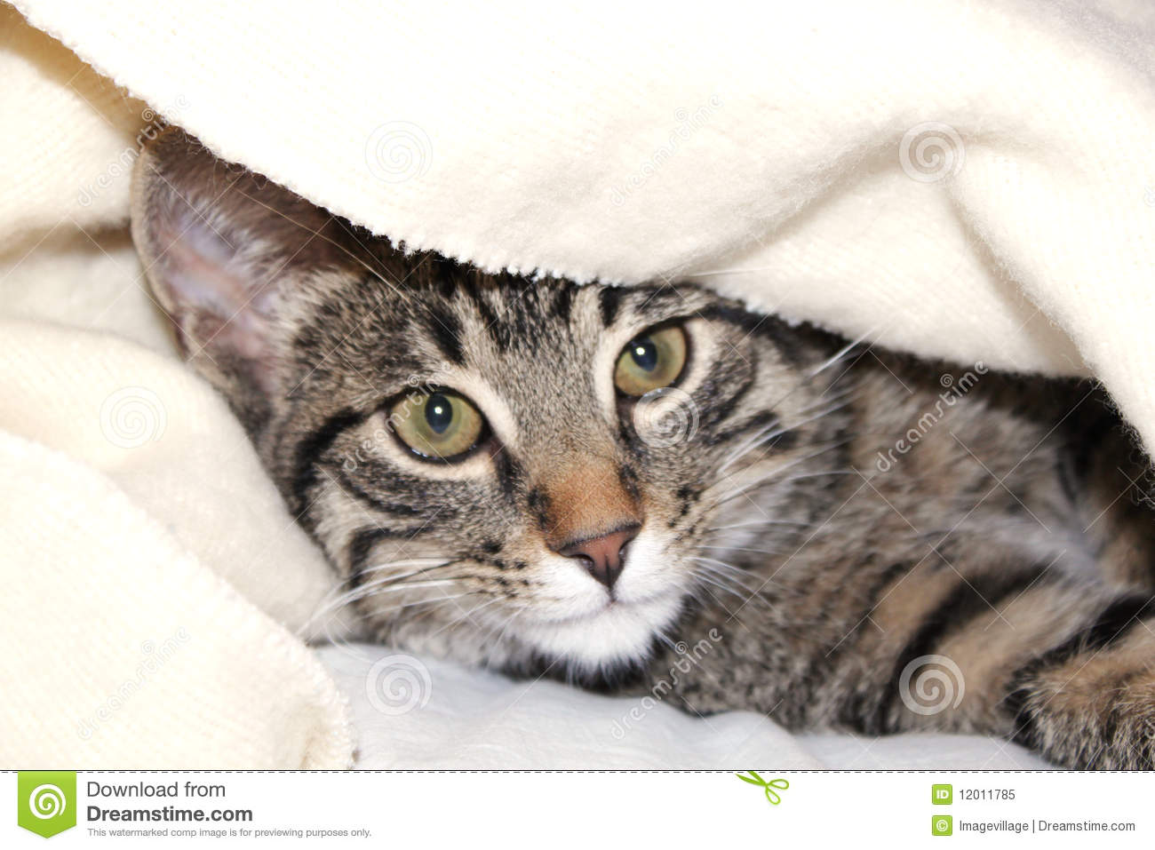 Cat Under A Blanket Royalty Free Stock Photo Image 12011785