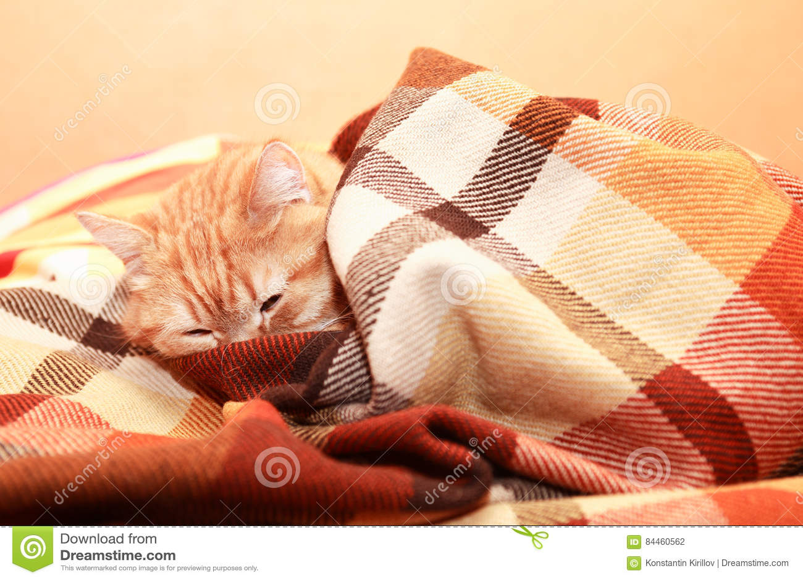 Cat Under Plaid