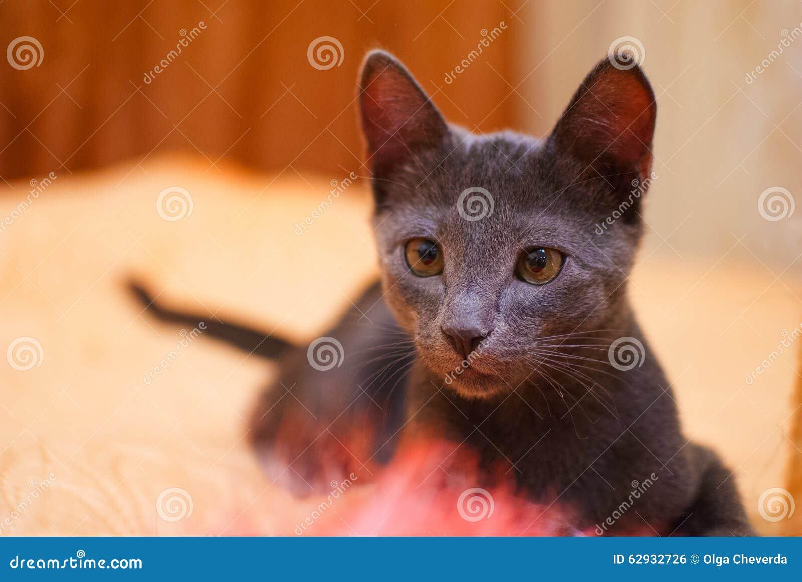 black wild cats