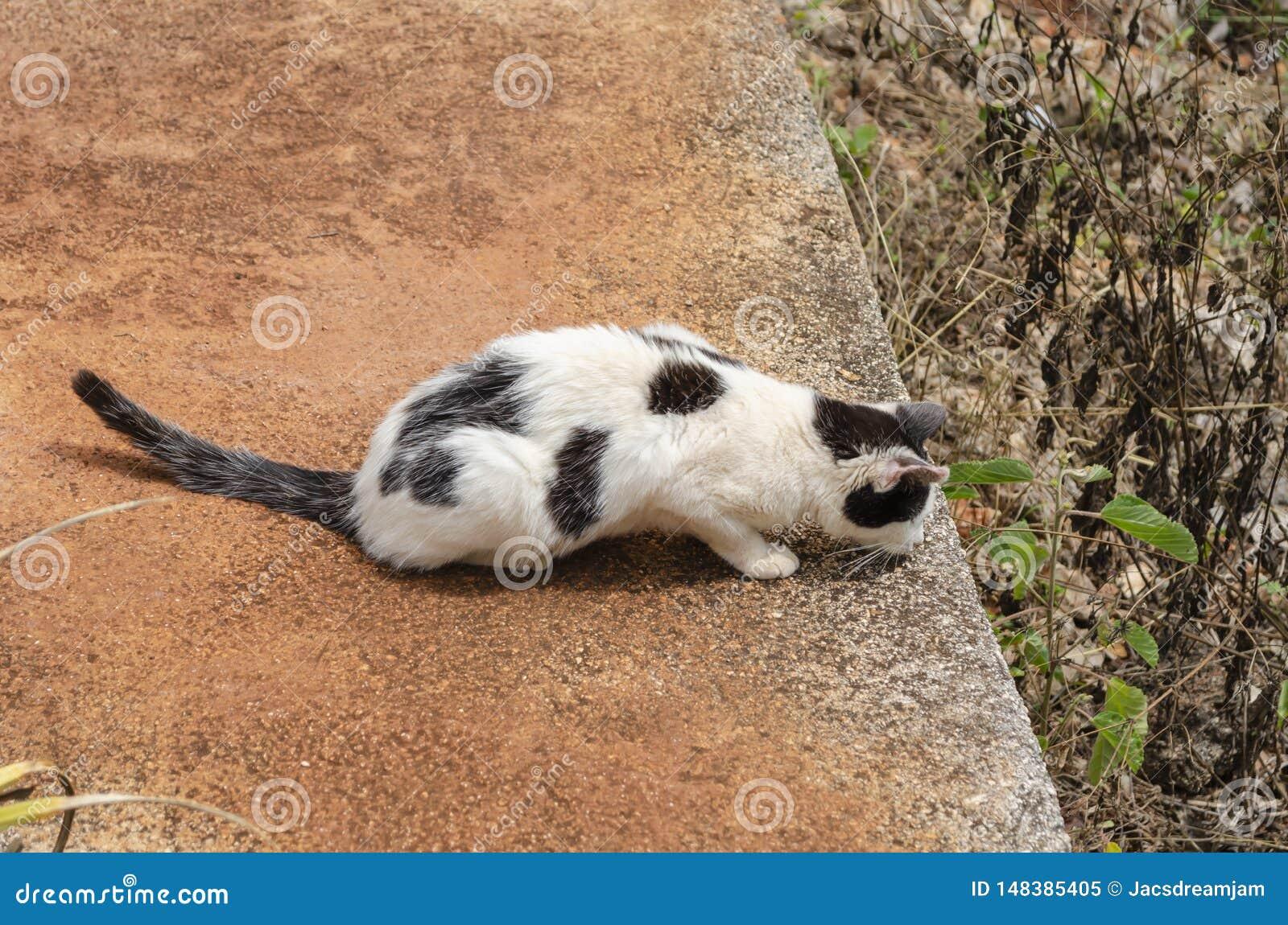 Cat In Wait