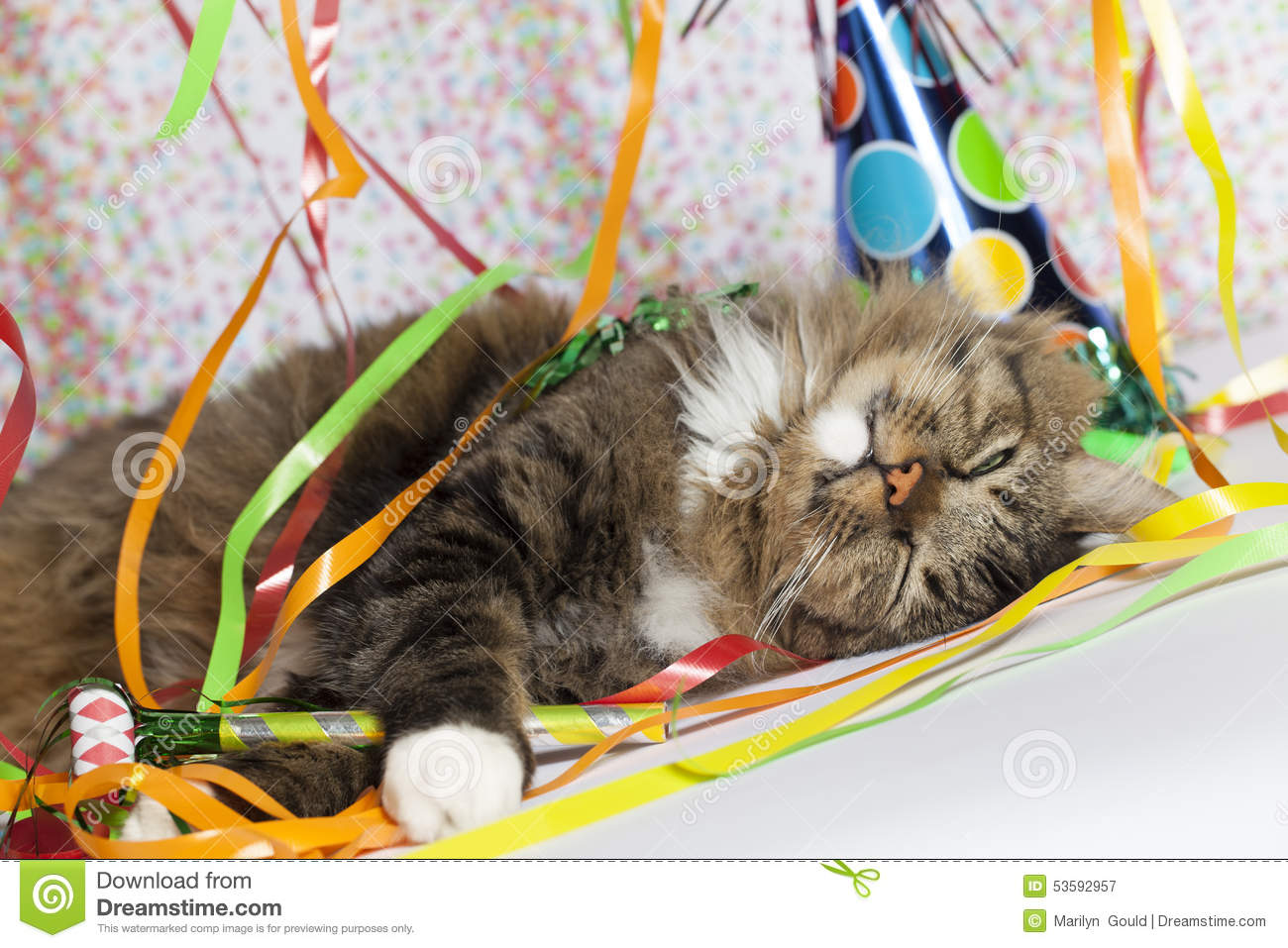 cat waking up after party stock photo image 53592957