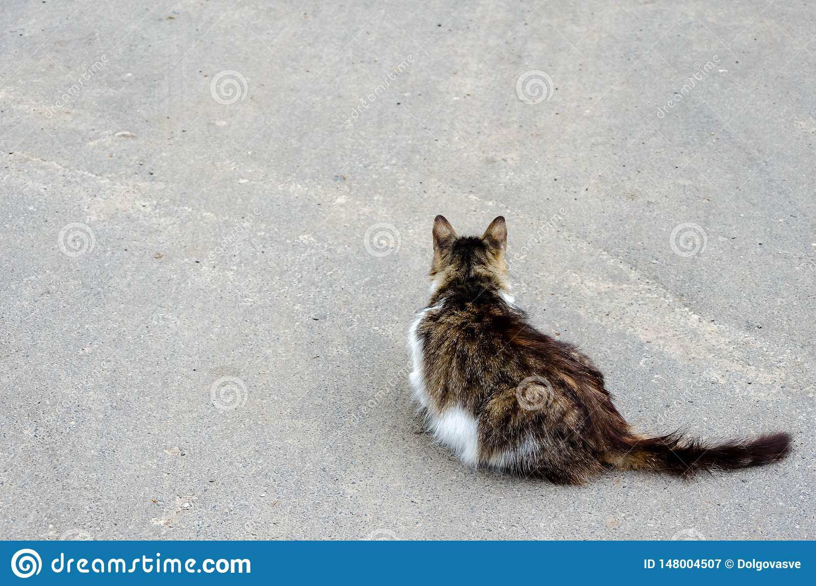 Cat walking at the ground. Copy space