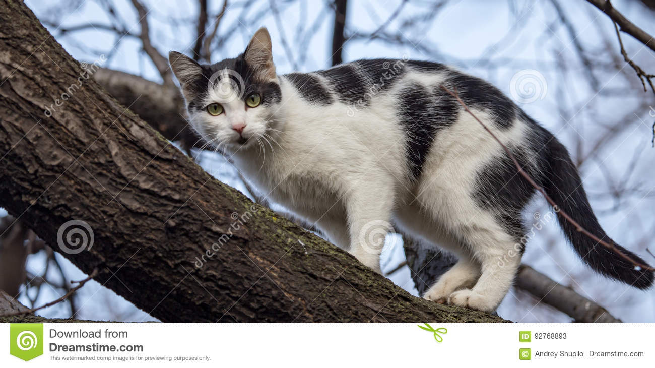 Cat Walks On A Tree Outdoors Stock Image - Image of purebred, cute ...