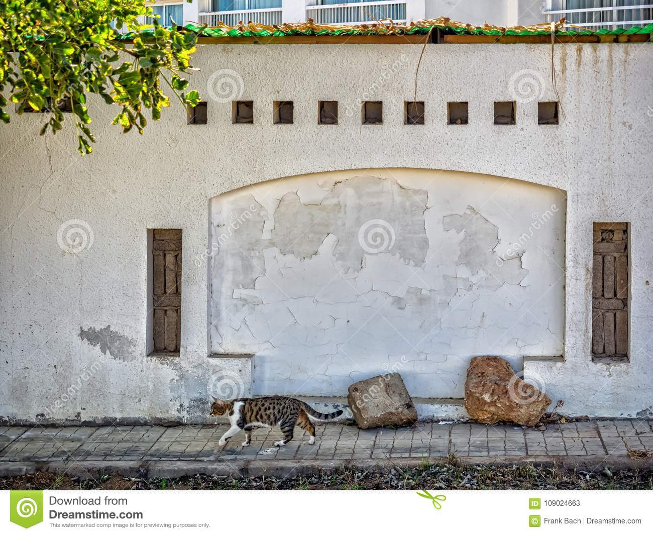 Cat And Wall In Sharm El-Sheikh,, Sinai, Stock Image - Image of view